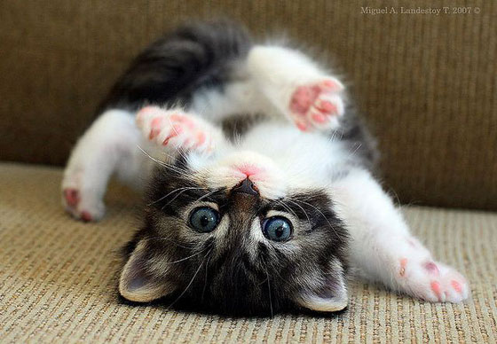 upside-down-kitty